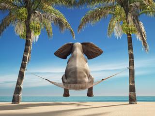 An elephant sitting in a hammock © Orlando Florin Rosu