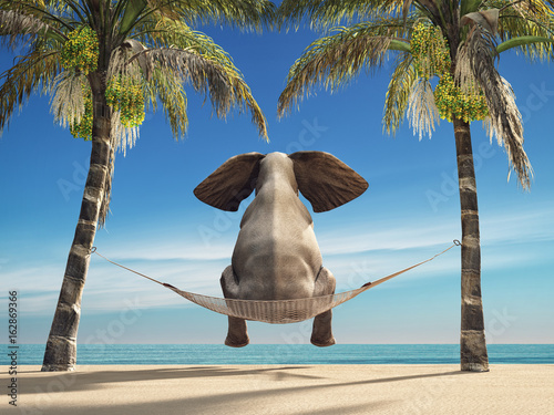 An elephant sitting in a hammock