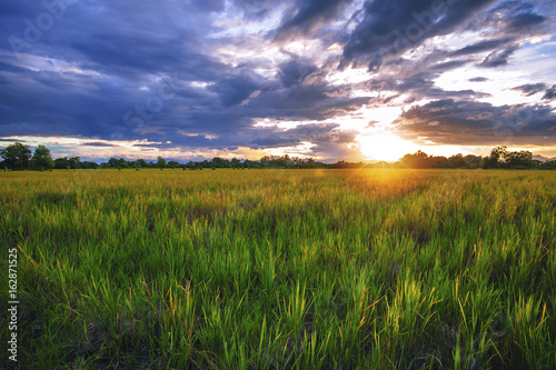 Landscape of sunset on a rice field in Thailand