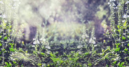 Summer nature background with wild plant and flowers, banner