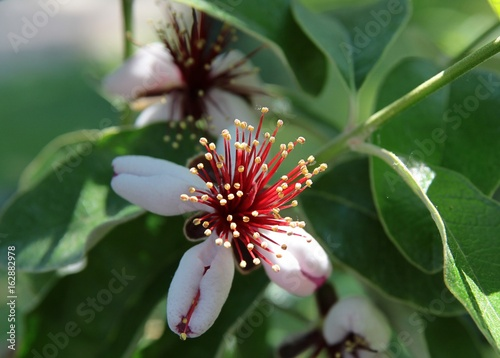pretty flower of bush