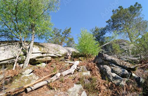 Gorges de Franchard parc régional naturel du Gâtinais