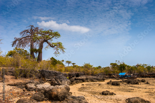 Baobabs on the shore of the Indian Ocean. ship lies on the beach at low tide.
