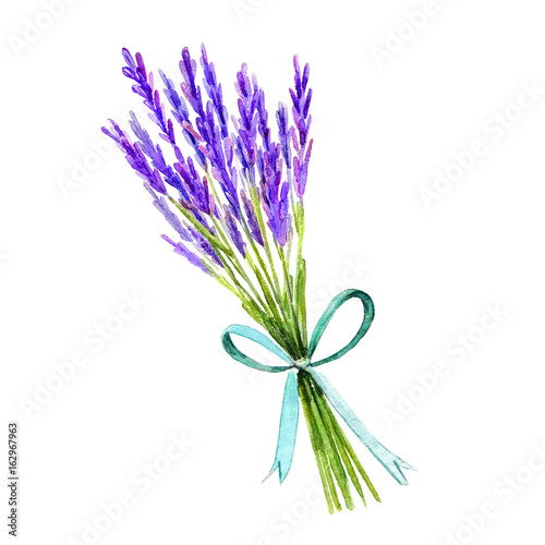 Watercolor hand painting branch of lavender bandage with ribbon illustration isolated white background. Vintage hand drawn sketch design. Provence style. © ulabagi