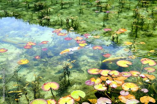 Papiers peints Pistache モネの池3