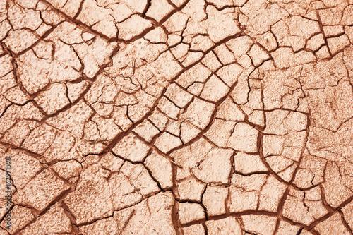 Foto Murales cracked dry muddy ground