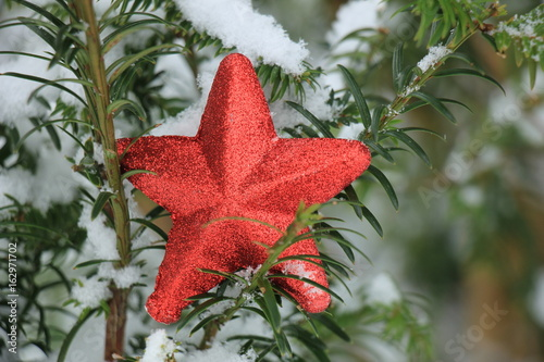 Ornament on a pine branch