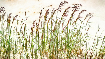 Blades of grass in the sand. Modern oil painting illustration art