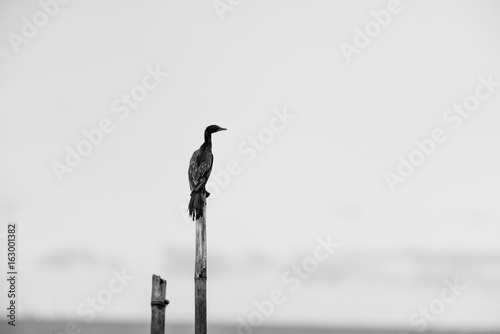 Black and white tones in minimalist photography - 163001382
