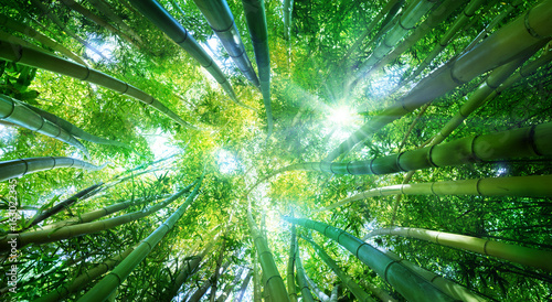 Canvas Bamboe Bamboo Forest With Sunlight