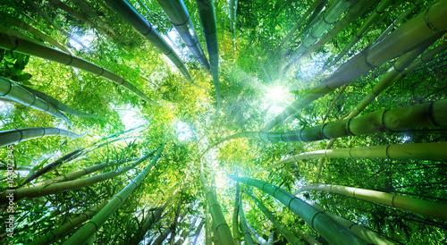 Aluminium Bamboe Bamboo Forest With Sunlight