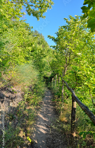 Mountain path among thickets of green trees