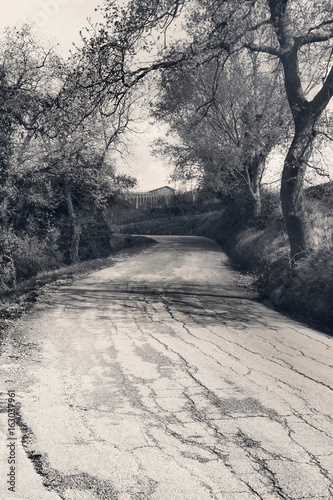 Country road through the woods, black and white