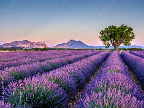 Keuken foto achterwand Lavendel Lavandes 5