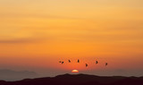 Birds flying at sunrise over the mountains - 163089586