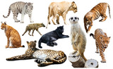 Set of wild mammals isolated over white - 163096541