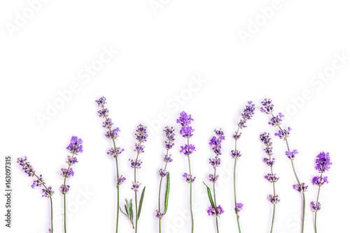 Papiers peints Lavande Fresh lavender flowers on a white background. Lavender flowers mock up. Copy space.