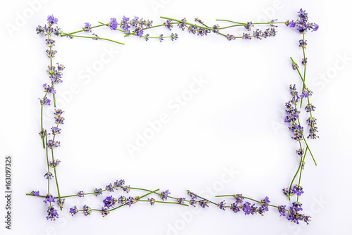 A frame of fresh lavender flowers on a white background. Lavender flowers mock up. Copy space. - 163097325