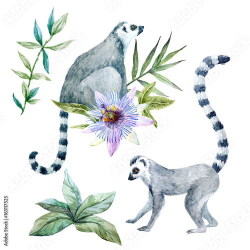 Watercolor lemurs with flowers - 163117525