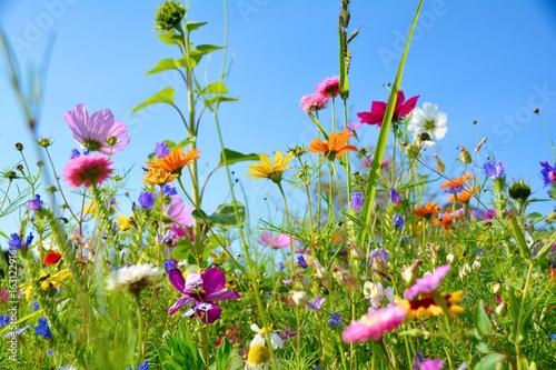 Grußkarte - bunte Blumenwiese - Sommerblumen - 163122916