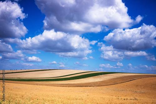 Weizenfeld mit Quellwolken