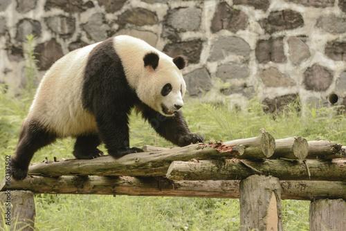 Panda Conservation Area, Chengdu