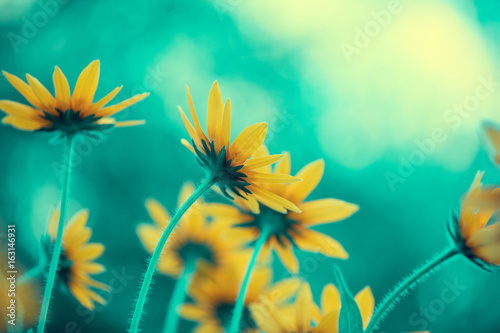 Foto op Canvas Groene koraal Vintage flower background at sunlight