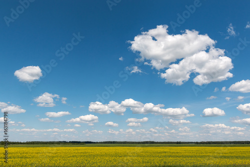 Blue sky with clouds over a field covered with yellow flowers