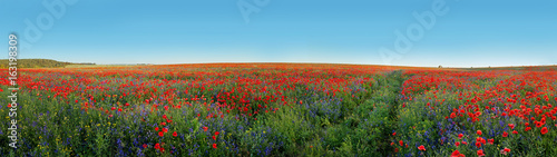 Panoramic view of field covered with flowers poppies and bells - 163198309