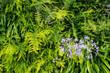 緑の葉が鮮やかな植物のテクスチャ