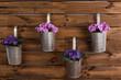 Violetas en maceteros sobre fondo de madera.