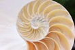 shell pearl fibonacci nautilus section spiral symmetry background half cross golden ratio structure growth close up back lit mother of pearl close up ( pompilius nautilus )