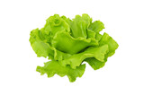 lettuce model from japanese clay on white background