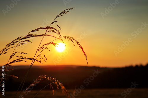 wild-grass-in-nature-on-a-sunset-background