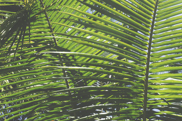 Tropical palm tree leaf background