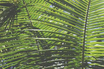 Tropical palm tree leaf background