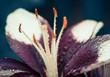 fresh summer flower with rain drops on leafs