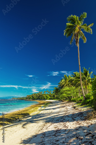 Natural vibrant tropical beach on south side of Samoa Island with palm trees