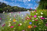 Beautiful flowers over river - 163248781
