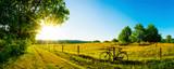 Landschaft im Sommer mit Bäumen und Wiesen bei strahlendem Sonnenschein - 163254966