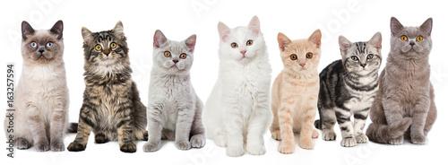 Różne młode koty