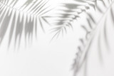 Shadows from palm trees on a white wall - 163262787