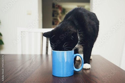 Curious cat drinking from mug Poster