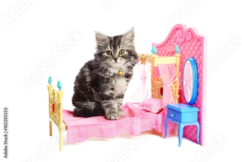 Kitty sitting on a bed