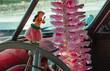 Hula girl toy on dashboard of classic car in Hawaii