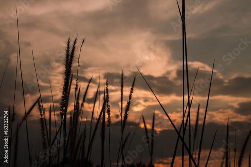 Naklejka Grass in the sunshine