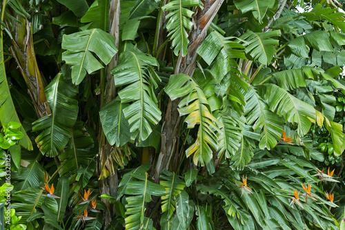 Foto Murales Lush green jungle background