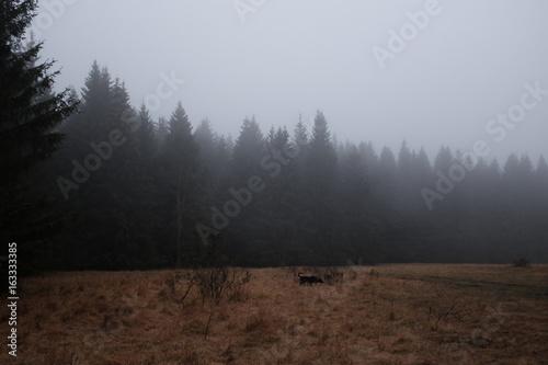 Prairie et forêt dans le brouillard