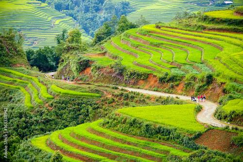 Obraz na Plexi Rice terraces in sapa