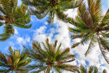 Beautiful summer view on palm trees with sunshine and a blue sky in Madagascar